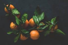 Mandarinas o clementinas con la hoja verde en fondo oscuro Todavía vida 1 Imagen de archivo
