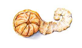Mandarine épluchée par aquarelle mûre Travail manuel Fruit tropical Nourriture saine Images libres de droits