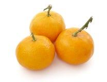 Mandarine 1 Stock Images