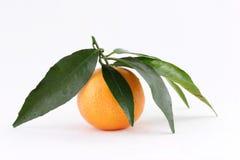 mandarine Fotografering för Bildbyråer