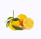 Mandarine Royalty Free Stock Images