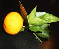 Mandarine auf einer Niederlassung mit Blättern Stockbild