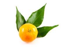 Mandarine avec des lames d'isolement sur le fond blanc Images libres de droits
