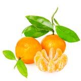 Mandarine avec des segments image libre de droits