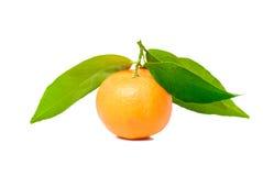 Mandarine avec les lames vertes Photo libre de droits