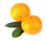 Mandarine avec les lames vertes Images libres de droits