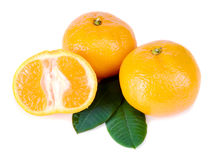 Mandarine avec les lames vertes Photos stock