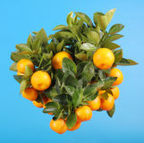 Mandarine branch Stock Photography