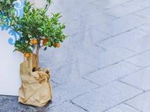Mandarine décorative d'arbre dans un pot sur la rue de Catane, Sicile, Italie images libres de droits
