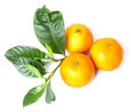 Mandarine délicieuse Photographie stock
