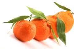 Mandarine de plan rapproché crue Photographie stock libre de droits