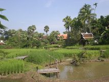 Mandarine de riz de Chiang Mai Image libre de droits