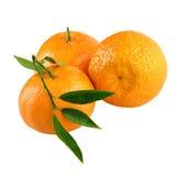 Mandarine des mandarines trois d'isolement sur le blanc Photographie stock libre de droits