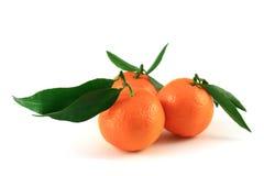 Mandarine drei Stockbild