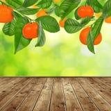 Mandarine drzewo Zdjęcie Stock