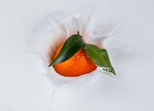 Mandarine falling into milk Royalty Free Stock Photo