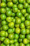 Mandarine fraîche Images stock