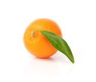 Mandarine fraîche avec les lames vertes Images stock