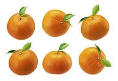 Mandarine fraîche d'isolement sur un fond blanc image libre de droits