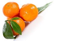 Mandarine fruits Stock Photography