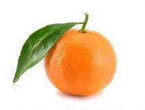 Mandarine getrennt auf Weiß lizenzfreies stockfoto