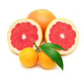 Mandarine and grapefruit Royalty Free Stock Photo
