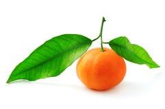 Mandarine. Isolated on a white background stock image