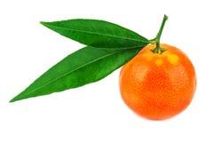 Mandarine juteuse et mûre photo stock
