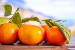 Mandarine with a leaf in italy. Group of five whole fresh orange mandarine with green leaves with italian mountains in background stock photography