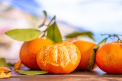Mandarine with a leaf in italy. Group of four whole fresh orange mandarine with green leaves one fruit is half peeled with italian mountains in background royalty free stock photography