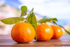 Mandarine with a leaf in italy. Group of three whole fresh orange mandarine one by one with green leaves with italian mountains in background stock images