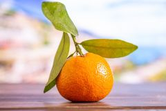 Mandarine with a leaf in italy. One whole fresh orange mandarine with green leaves with italian mountains in background stock images
