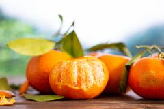 Mandarine with a leaf in a jungle. Group of four whole fresh orange mandarine with green leaves one fruit is half peeled in a foggy jungle mountains stock image