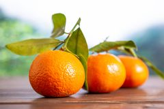 Mandarine with a leaf in a jungle. Group of three whole fresh orange mandarine one by one with green leaves in a foggy jungle mountains royalty free stock photo