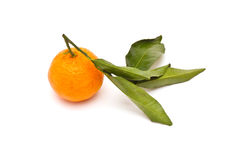 Mandarine mûre Photographie stock libre de droits