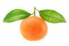 Mandarine mûre avec les lames vertes de pousses. Images stock