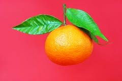 Mandarine mit drei Blättern fotografiert Lizenzfreie Stockfotos