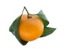 Mandarine mit grünen Blättern Lizenzfreies Stockfoto
