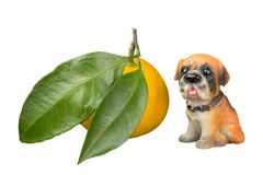 Mandarine mit großen Blättern und einem Hund Lizenzfreies Stockfoto