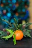 Mandarine mit Kiefernzweigen Stockfoto