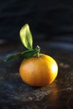 Mandarine orange on a black metal background. Stock Image
