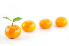 Mandarine orange. Ripe mandarin citrus  tangerine mandarine orange on white background Stock Image