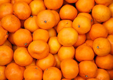 Mandarine oranges Stock Photography