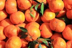 Mandarine oranges Royalty Free Stock Images