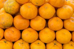 Mandarine, riches d'agrumes dans la vitamine C photos stock
