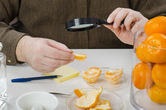 Mandarine slices are carefully inspecting Stock Images