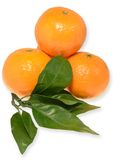 Mandarine with a sprig. Tangerines on a white background Royalty Free Stock Images