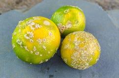 Mandarine tropicale Photographie stock