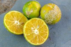 Mandarine tropicale Photos stock