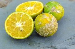 Mandarine tropicale Image libre de droits